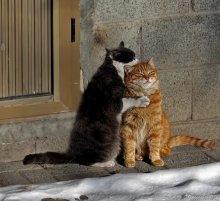 Тебе скучно, тебе одиноко? / недомашние коты в другой обработке