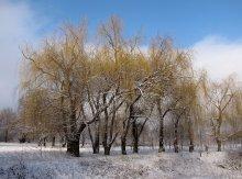 Без названия / зима, деревья