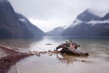Кёнигзее / озеро,туман, коряга
