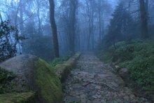Дорога на замок / Дорога на замок Мавров (Португалия). Эта тропа закрыта от туристов, пришлось перелазить забор, но это того стоило :)
