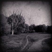 Solitude / ....................