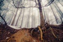 Весна в таинственном лесу / ***