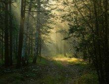 В лесу / утром в лесу