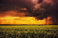 Summer Storm / перед грозой