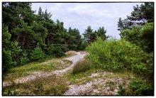 Дорога к морю / Литва, Паланга
