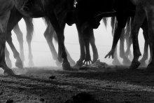 Улак / В 5 км от Чимгана на склонах горы Кумбель (2200м) находится горнолыжный комплекс Бельдерсай. Бельдерсай славится самой длинной горнолыжной трассой в Узбекистане, а также здесь имеется канатная дорога протяженностью более 3 км. Однако на вершине данной канатной дороги есть еще один вид развелчений. Это прогулки на лошадях. Держат этот лошадиный прокат местные казахи. Которые в свободное время от проката играют в Улак или козлодрание. Козла нет поэтому играют они тряпкой.
