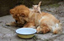 Кто съел мой обед? / или кто в доме хозяин