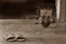 Про грустную собаку / ждет хозяйку