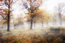 Зачарованные / Осенний лес