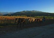 С лошадьми / и старым пастухом
