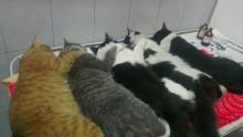 """Коты / Я иногда люблю """" чёрный юмор """", но не до такой же степени..."""