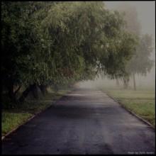 / город,утро,туман,аллея