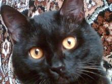 Мой кот / Вася в молодости