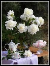 Весеннее настроение... / Поздравляю всех женщин с праздником весны!