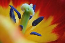 «Flower» / Стекинг из 4 кадров (хотя нужно было побольше)