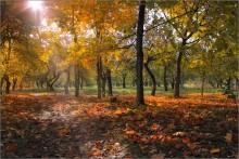 Разноцветная осень / Природа Беларуси