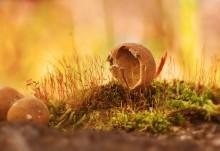 Это гриб / снято в лесу