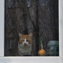 За любимым окном / ***