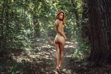 walk in the woods /