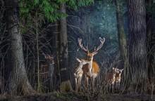 Про завистника / Олени семья лес