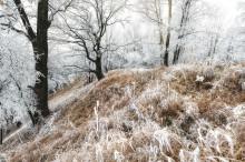 В зачарованном лесу / Подморозило