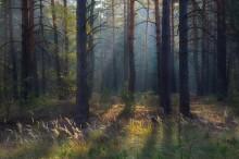 / в лесу