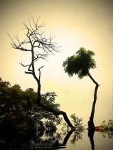 вечер в джунглях / мобильная фотография