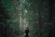 / первобытный лес
