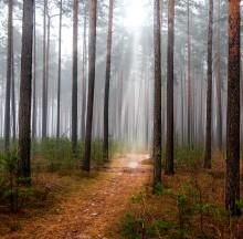 Без названия / лес