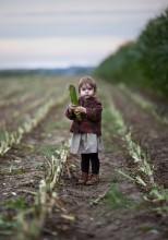 Сборщица кукурузы /