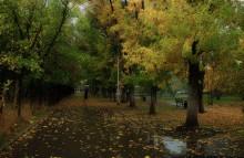 Осень.Скоро зима. / В парке