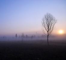_iI* / утро, дерево, туман