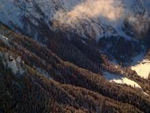 Альпийский лес / ***