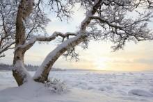 северная зима / Бело море, короткий зимний день у полярного круга.