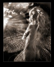Сказка волшебного леса / люблю я крылышки
