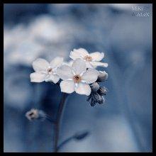 Ябудужить flower / ***Ябудужить flower***