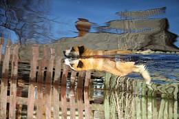 Собачкин день / Собака, плывущая по деревенской улице во время весеннего разлива реки