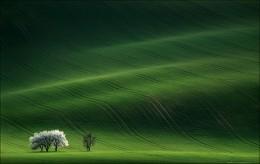 ... Ladies in White / Чехия, Южная Моравия, минувшая неделя. Очень хотелось этой весной попасть в тот период, когда будут цвести деревья.... Так оно и произошло ..  Приглашаю на майские праздники в эти же и иные места. http://fototour.by/south-moravia/ . .