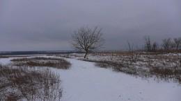 Зимний пейзаж с деревом / поле,снег,дерево,дали