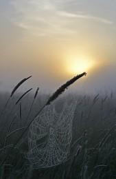 Паутина / Паутина туманным утром.