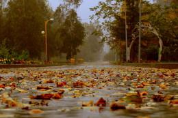 Дождь. / В моём городе дождь.