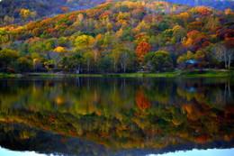 В багрец и золото, одетые леса... / Осень 2015 года в Приморском крае и её отражение в озере.