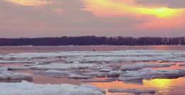 Незолотое сечение / Ворона на льдине, вечер в розовых тонах,Волга