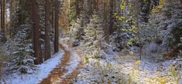 Первый снег / Лесной тропинкой по первому снегу