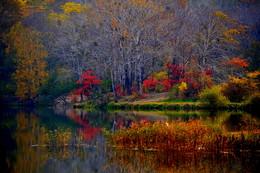 Октябрь уж на дворе... / Осень В Приморском крае. Октябрь.