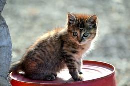 На солнышке. / Котёнок на базе отдыха.