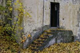 Осенний / ***