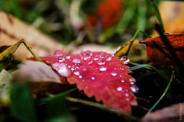 Autumn Leaf Is Crying. / No Commets.