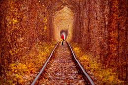 Возвращение / Листья желтые над городом кружатся,   С тихим шорохом нам под ноги ложатся,   И от осени не спрятаться, не скрыться,   Листья желтые, скажите, что вам снится.
