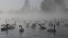 озеро Светлое / Туманное утро на лебедином озере